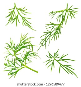 Collection of biologic dill isolated on white background with clipping path as package design element and advertising. Full depth of field. Organic farming.