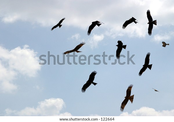 a collection of birds in flight