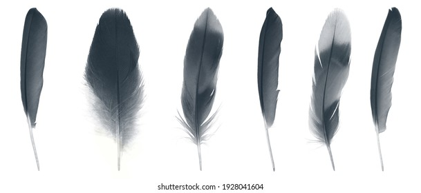 Collection black feather isolated on white background