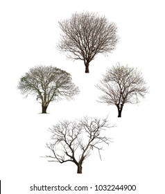 Collection of black tree silhouettes or dead tree on white background