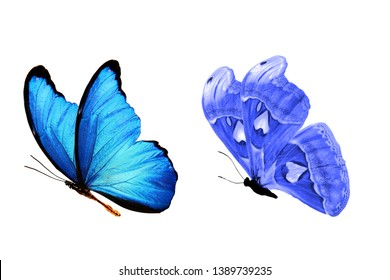 collection of blue butterflies. isolated on white background