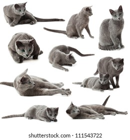 cat with attitude images stock photos  vectors