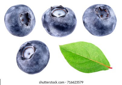 collection of blueberries isolated on white background. Wild berry