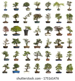 Collection of bonsai trees, isolated on white