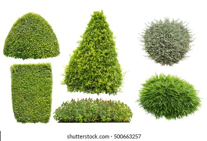 collection of bush or shrub isolated