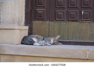 Collection of cats: cats in Baku