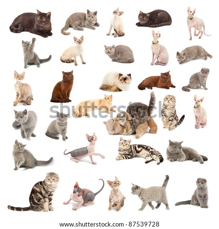 collection cats different poses different species stock