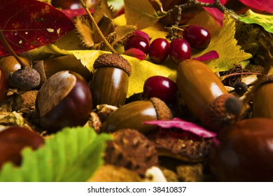 A collection of chestnuts,acorns and autumn leaves