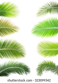 Collection of coconut and palm leaf isolated on white background
