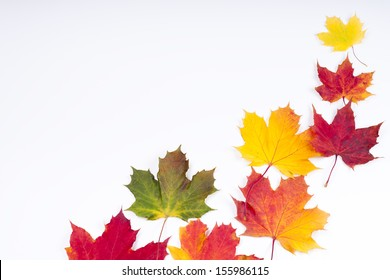collection colorful autumn leaves of maple