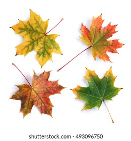 Collection of colorful autumn maple leaves isolated on white background