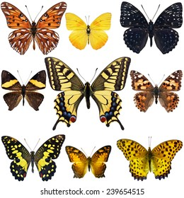 Collection of colorful butterfly isolated on white background