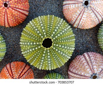 collection of colorful sea urchins on sand beach