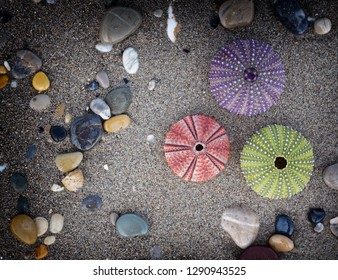 a collection of colorful sea urchins and pebbles on wet sand, filtered image