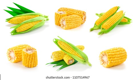 Collection corn on the cob kernels close up shot