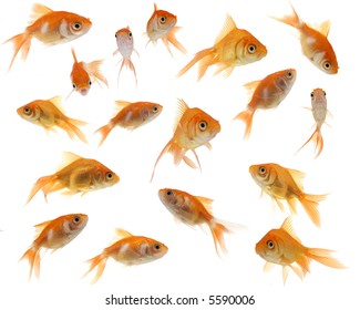 A collection of cute and whimsical goldfish against a white background.