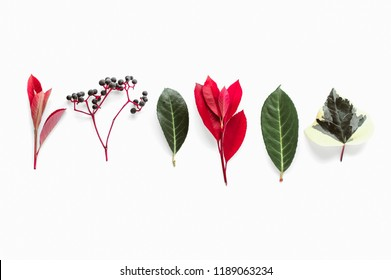 Collection of different autumn plants and leaves. Red, green and purple colors. Isolated on white background fall themed pattern. Faded shadows, minimalistic clean style. Design for social media posts