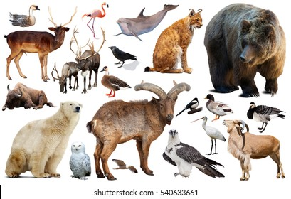 collection of different birds and mammals from Europe isolated on white background