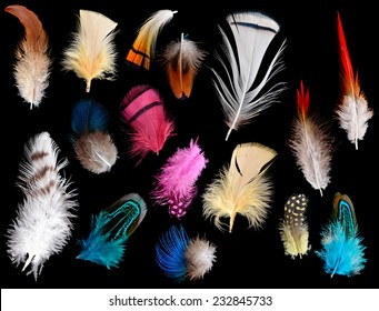 Collection of different color feathers. Isolated on black background.