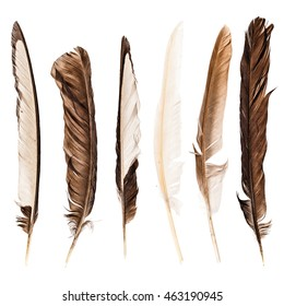 a collection of different feathers isolated over a white background