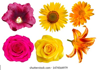 Collection of different flowers on a transparent background. Roses, calendula, lily. sunflower.