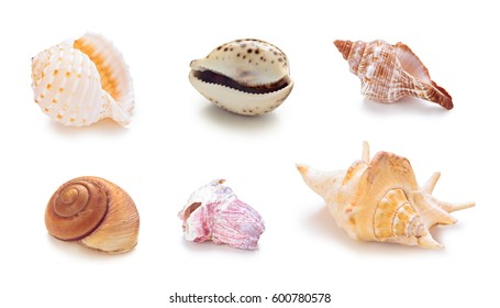 Collection of different sea conch shells in a row.  Isolated on white background.