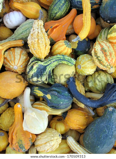 Collection of different squash
