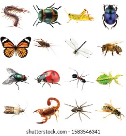 a collection of different type of insects