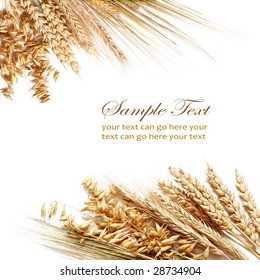 Collection of different wheats isolated on white.