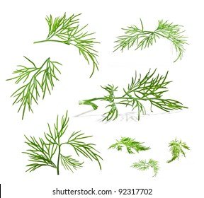 Collection of dill with a light shadows isolated on white background, closeup
