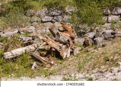 Collection of driftwood in the Jenbachparadies near Bad Feilnbach