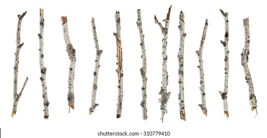 Collection dry branches birch isolated on white background