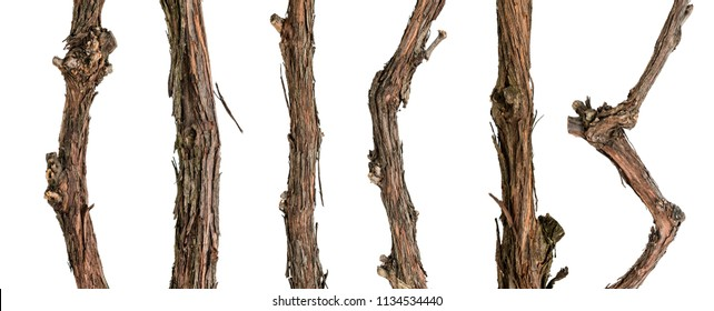 Collection dry branches of the vine isolated on white, including clipping path