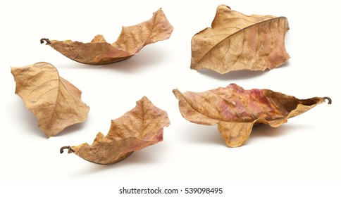 Collection of dry leaf closeup on the white background
