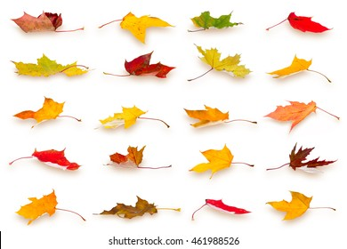 Collection of falling autumn maple leaves, isolated on white background.