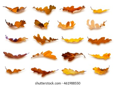 Collection of falling autumn oak leaves, isolated on white background.