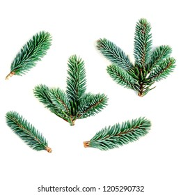 Collection of  fir branches isolated on white background. Pine branch, Christmas confier tree.  Close up