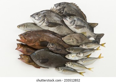 Collection of fish caught in the sea