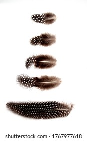 A Collection of five guinea fowl feathers displayed on a white background
