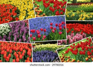Collection of flora photos