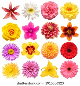 Collection flowers alpine aster, rose, iris, lily, gerbera, dahlia, cyclamen, narcissus, daisy isolated on white background. Creative spring composition, Easter, Valentine's Day. Flat lay, top view