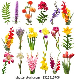 Collection flowers assorted iris, phlox, daisy, tulip, dahlia, lavender, liatris, wild grass, lily, gladiolus, daffodil, bell, astilbe leaf isolated on white background. Flat lay, top view