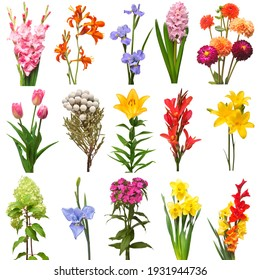 Collection of flowers bouquet hyacinth, hydrangea, carnation, brunia, gladiolus, iris, daffodil, dahlia, tulip, canna isolated on a white background. Top view, flat lay