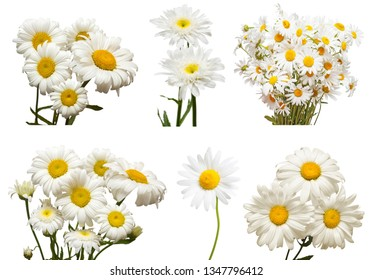 Collection of flowers white daisy isolated on white background. Hello spring. Beautiful plant, garden concept. Nature. Easter. Love. Flat lay, top view
