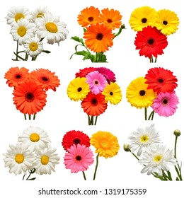 Collection of flowers white daisy and multicolored gerbera, calendula isolated on white background. Hello spring. Beautiful plant, garden concept. Nature. Easter. Love. Flat lay, top view