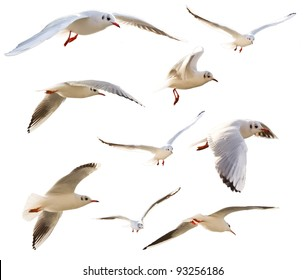 Collection of flying seagulls, isolated on white background