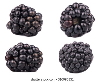 Collection of four blackberries isolated on a white background