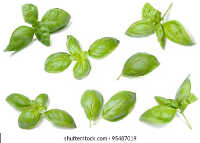 Collection of fresh basil leaves isolated on white