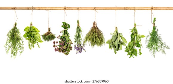 Collection of fresh herbs hanging isolated over white background. Bundle of basil, sage, dill, thyme, mint, marjoram, lavender.