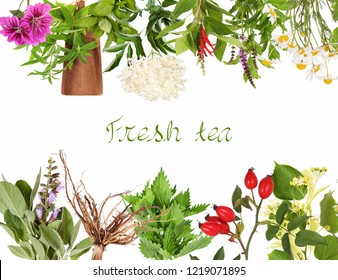 Collection of fresh tea plants